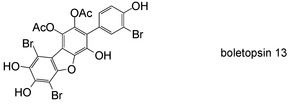 Discovery and synthesis of boletopsins 13 and 14, brominated fungal metabolites of terrestrial origin