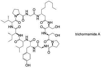Towards the total synthesis of trichormamide A, a cyclic undecapeptide