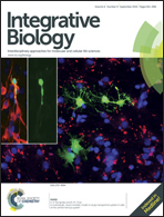 Journal cover: Integrative Biology